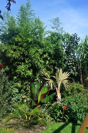 bambus exoten und palmen claus willich. Black Bedroom Furniture Sets. Home Design Ideas